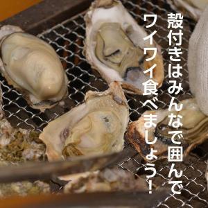 広島県産 島田水産 殻付き牡蠣 50個|shimadasuisan|02