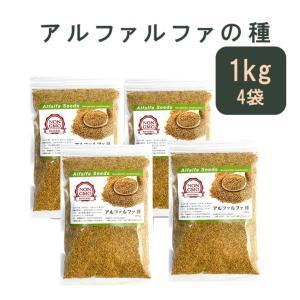 アルファルファ 種 1kg 高品質 オーストラリア産 (1000g Alfalfa 野菜種 あるふぁ...