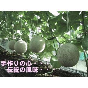 訳あり 静岡産 温室マスクメロンアローマ印 1玉入 約1.3...