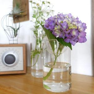 SPICE OF LIFE 水栽培用 花瓶 バルブベース クリア ショート 直径8cm 高さ13cm ガラス KEGY4060 shimizunet004