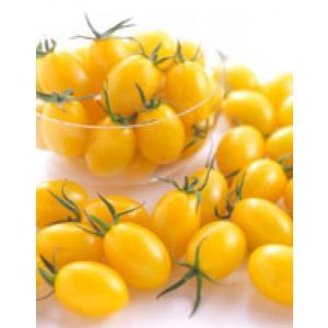 【ミニトマト】サカタ交配 イエローアイコ PRIMAX 小袋 ★新タネのお届けは12月以降を予定