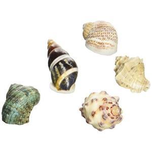 オカヤドカリの 宿替え貝殻Sの関連商品6
