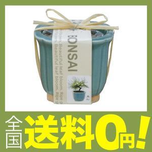 聖新陶芸 和心盆栽セット 黒松 GD-4201の関連商品4