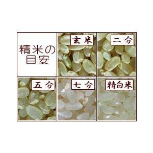 令和1年 佐賀県白石地区産 特別栽培 『七夕コシヒカリ』 10kg|shinozaki-kome|02