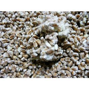 しのざき米店の手作り国産(信州安曇野)小麦麹1kg|shinozaki-kome|03