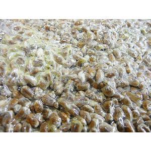 しのざき米店の手作り国産(信州安曇野)小麦麹1kg|shinozaki-kome|04