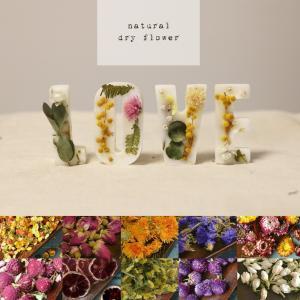 【在庫限り】 ネイルパーツ 天然ドライフラワー 10種 花 ハーバリウム ハンドメイド レジン ガラスドーム|shinwa-corp