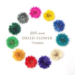 【 在庫限り 】 ハンドメイド ドライフラワー 11種 花 ハーバリウム ハンドメイド レジン ガラスドーム|shinwa-corp