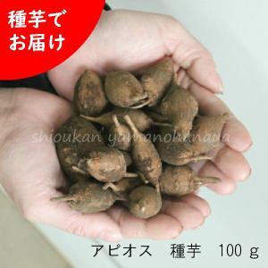 アピオス 種芋(素掘り苗)100g 山菜苗|shioukan-hanaya