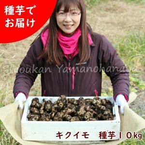 キクイモ種芋(素掘り苗)10kg(50〜70個程)|shioukan-hanaya