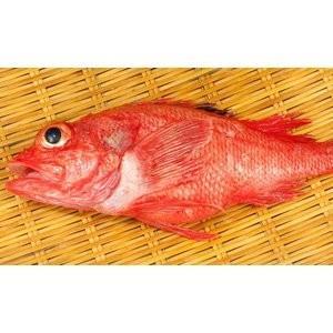 (鮮魚)純粋知床産生きんき1尾550〜590g キンキ 魚|shiretokokinki