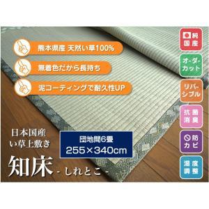 い草上敷き 畳カーペット ござ 団地間6畳 純国産/日本製 255×340cm 知床(しれとこ) サイズオーダー可 選べる縁