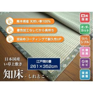 い草上敷き 畳カーペット ござ 江戸間6畳 純国産/日本製 261×352cm知床(しれとこ) サイズオーダー可 選べる縁の画像