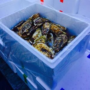 殻付き カキ 2kg 殻付牡蠣 生鮮 加熱用 宮城県産 三陸産 shiromura