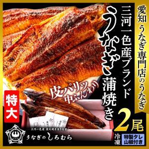 うなぎ 特大 2尾 (一尾 170g前後) TK-2 鰻     ウナギ 国産 三河一色産 炭火焼き ギフト shiromura