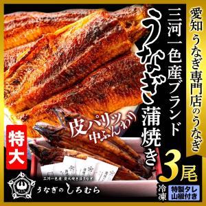 うなぎ TK-3 特大 3尾 (一尾 170g前後) 鰻    ウナギ うなぎ 国産 三河一色産 炭火焼き shiromura