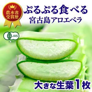アロエベラ アロエ 生葉 1枚|shirounouen