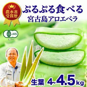 アロエベラ アロエ 生葉 6kg|shirounouen