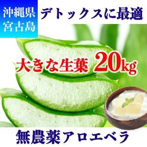 アロエベラ アロエ 生葉 20kg|shirounouen