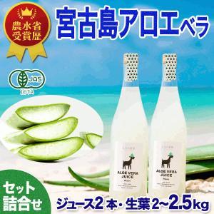 アロエベラ 100% アロエ 生 ジュース 2本 アロエ 生葉 3kg 健康セット|shirounouen