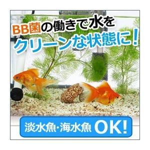 エコ・バイオマーブル(4個) ビッグバイオ|shizenkan