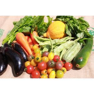 無農薬旬 野菜Lセット ギフト 自然食品 gift|shizenkizuna-store
