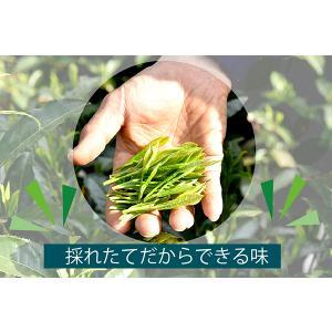 【販売中】静岡手摘み新茶「丸子わせ」 30g 静岡一早い静岡新茶2020年初物 高級茶葉 煎茶 緑茶 季節限定 旬の香り shizuokahagiricha 08