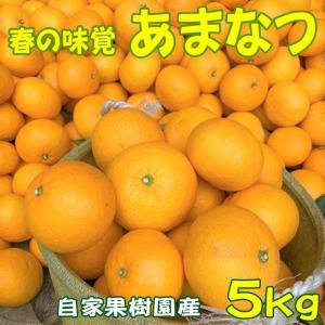 あまなつみかん 5kg|shizuokaochaya