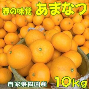 あまなつみかん 10kg|shizuokaochaya