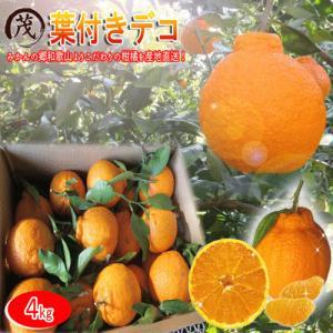 樹上熟成葉付きデコ 5kg (約18玉〜26玉) 訳あり 送料無料 甘い 果物 フルーツ 高糖度 ノ...