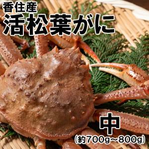 香住産・活松葉がに(大)(約600g)1匹(カニ かに 蟹 ズワイガニ ずわいがに 松葉ガニ 松葉蟹 お取り寄せ 産地直送) shop-syukuin
