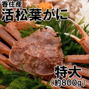 香住産・活松葉がに(特大)(約800g)1匹(カニ かに 蟹 ズワイガニ ずわいがに 松葉ガニ 松葉蟹 お取り寄せ 産地直送) shop-syukuin