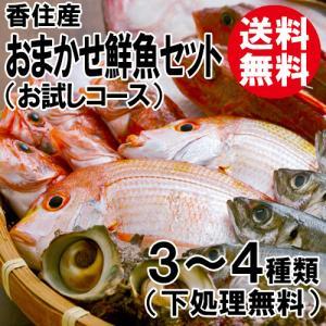 おまかせ鮮魚セット お試しコース 4〜5種類 送料無料 海鮮ギフト 詰め合せ 日本海の鮮魚 鮮魚ボックス 鮮魚BOX 下処理 お取り寄せ 産地直送 ギフト shop-syukuin