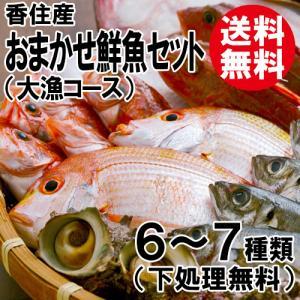 おまかせ鮮魚セット 大漁コース 高級魚1種類+5〜8種類 送料無料 海鮮ギフト 詰め合せ 日本海の鮮魚 鮮魚ボックス 鮮魚BOX 下処理 お取り寄せ 産地直送 ギフト shop-syukuin
