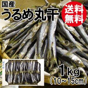 うるめ丸干 1kg 国産 送料無料 ウルメイワシ うるめいわし ウルメ丸干 干物|shop-syukuin
