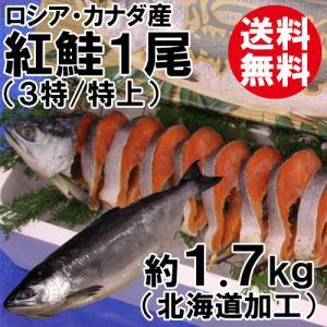 紅鮭1尾(約1.7kg)(3特/特上)(沖獲れ)(化粧箱入)(ロシア・カナダ産/北海道加工)[送料無料] shop-syukuin
