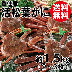 香住産・活松葉がに(2〜3枚)(約1.5kg)(大きさ不揃い)[送料無料](カニ かに 蟹 ズワイガニ ずわいがに 松葉ガニ 松葉蟹 お取り寄せ 産地直送) shop-syukuin
