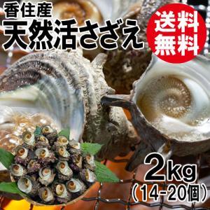 香住産 天然活サザエ 約2kg 14〜20個 送料無料 さざえ バーベキュー BBQ お取り寄せ ギフト 海鮮 shop-syukuin