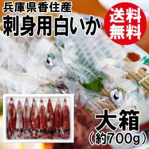香住産 刺身用 白いか 大箱 4~8杯入 送料無料 剣先イカ ケンサキイカ いか イカ 烏賊|shop-syukuin