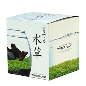聖新陶芸 育てる水草 L 約18.2x16.5x16.4cm GD-813 shop-white