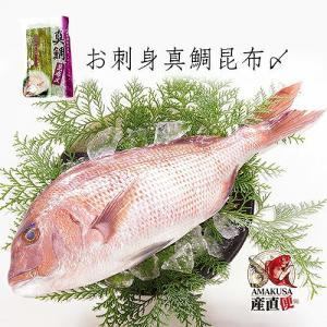 真鯛昆布〆 200g×3袋 |shopamakusa
