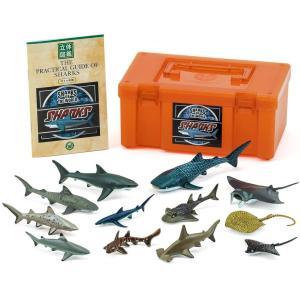カロラータ サメの仲間 フィギュア ( 立体図鑑 ) 魚 リアル フィギュアボックス 解説書付き 食品衛生法クリア 12種|shopnoa