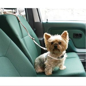 ecololo犬用シートベルト 〜25Kg shopping-hers