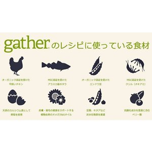 Gather ギャザー フリーエーカー 454gx5袋|shopping-hers|02