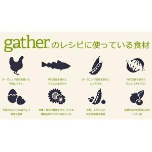 Gather ギャザー ワイルドオーシャン 454gx5袋+フィッシュ4シージャーキー15g|shopping-hers|02