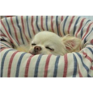 Landy Larick Designs Mogg Bed 専用カバー Garze Cover L shopping-hers