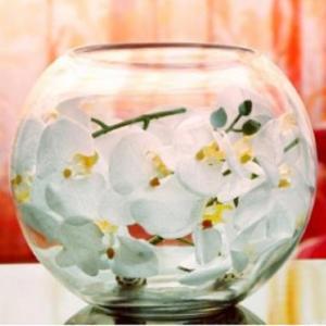 金魚鉢 テラリウム 花瓶 ガラス おしゃれ 丸い 18cm