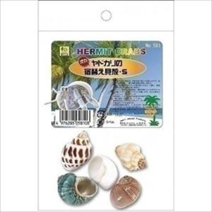 オカヤドカリの宿替え貝殻 S|shoptakumi