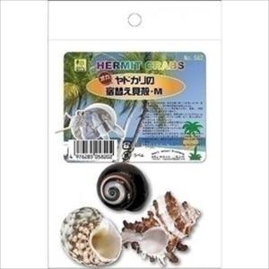 オカヤドカリの宿替え貝殻 M|shoptakumi