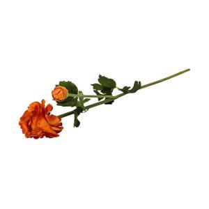 FLOWER ラナンキュラスL/オレンジ shopv